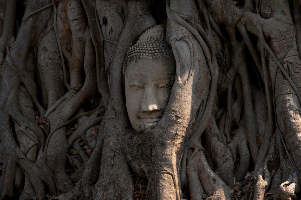 アユタヤのワット・マハタート遺跡にある菩提樹の根に包まれた仏像の頭の写真