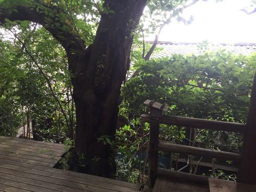 森のテラス 仙川