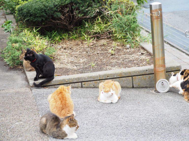 浦安 猫実