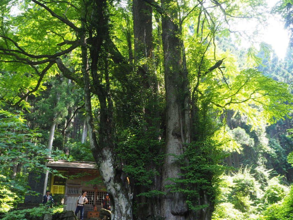 軍刀利(グンダリ)神社 奥の院