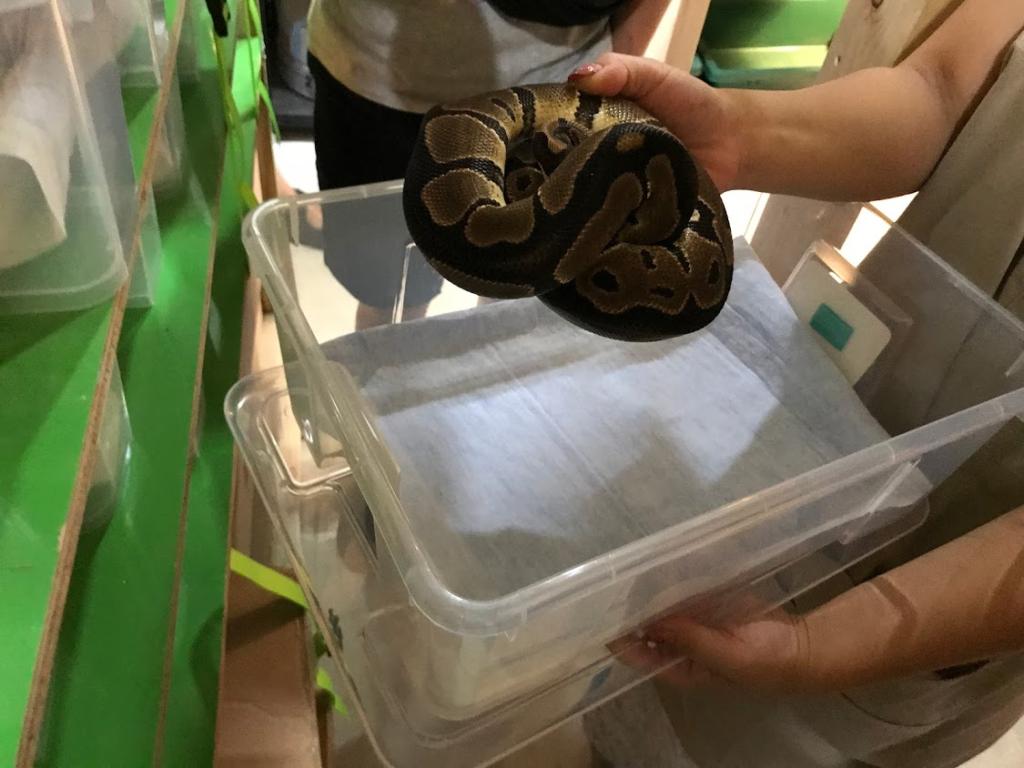 Reptile Kingdom 行徳