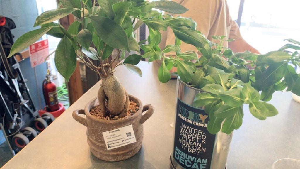 鷰 en テーブル 観葉植物